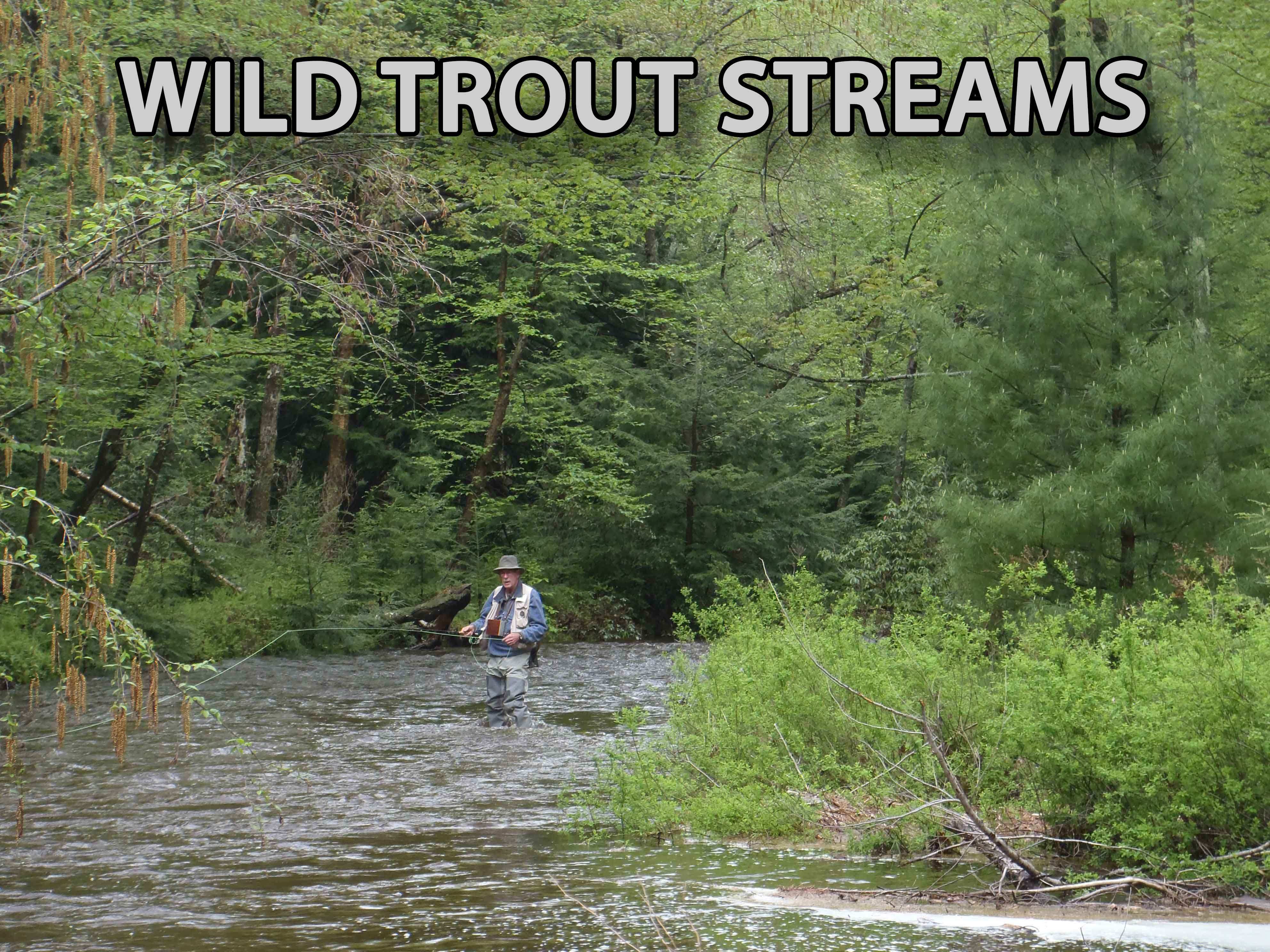 Wild Trout Claas A Fly Fishing In Pennsylvania