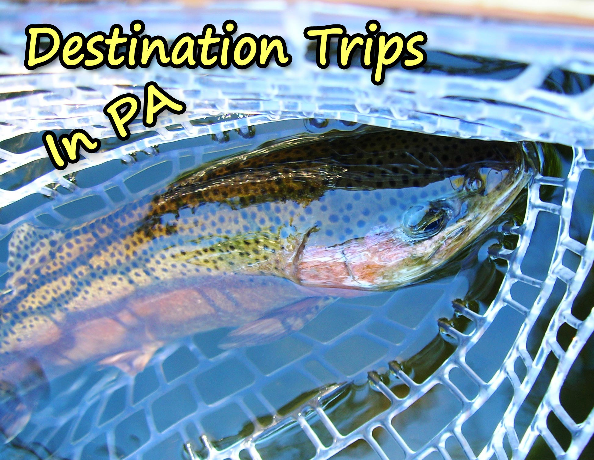 Enjoy One Of Our All Inclusive  (Food, Lodging and Guiding) Trips In Central Pennsylvania, Penns Creek, Spring Creek, Little Juniata And Local Brook Trout Streams