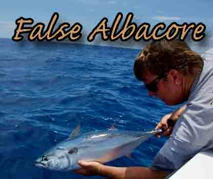 Come Join Sky Blue And Author, Tom Gilmore, On Our Trip To Catch False Albacore In Florida.