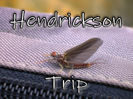 The First Big Mayfly Of The Year! Come Enjoy Fishing Penns For Large Trout Coming Up To Hendrickson and Grannoms.