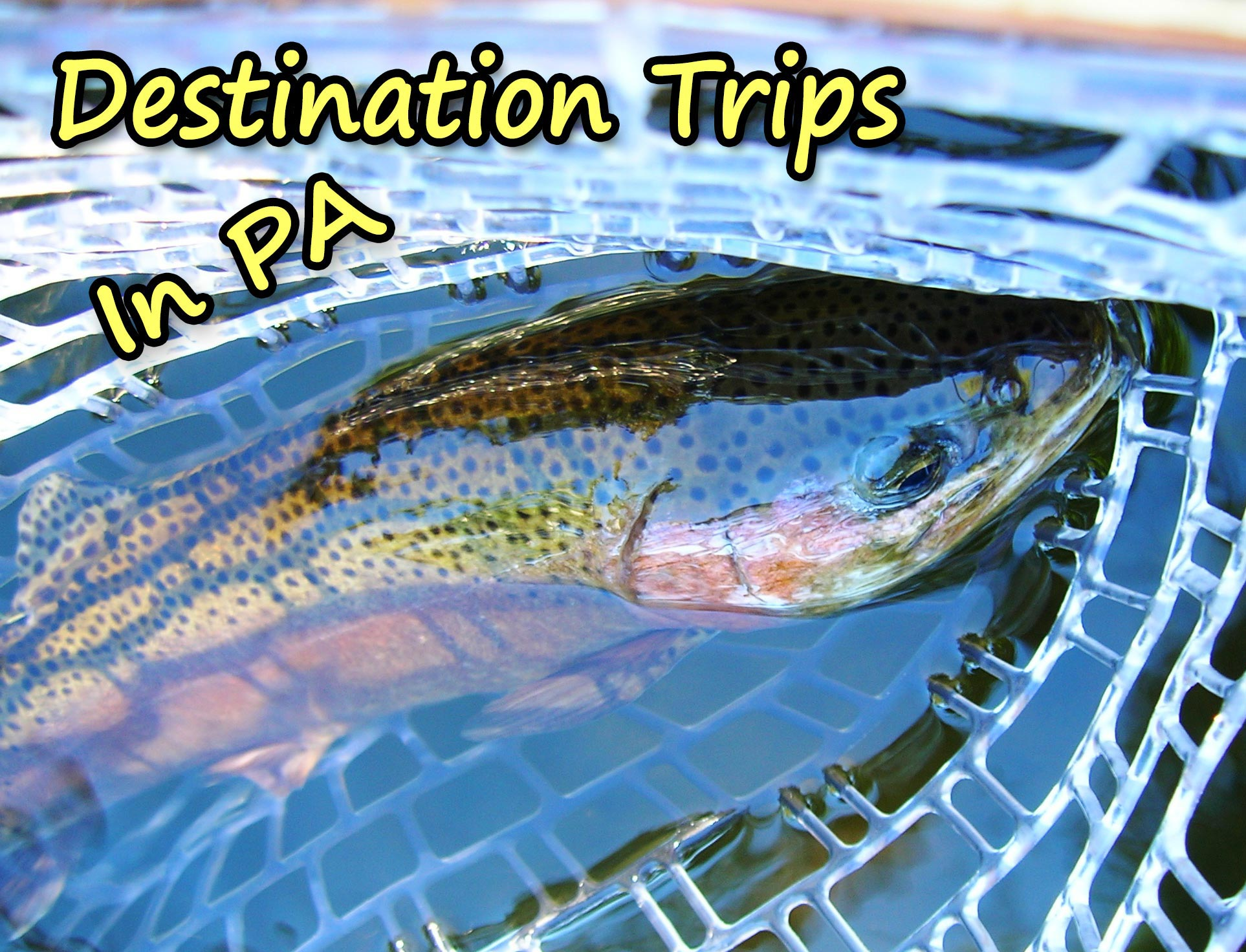 Enjoy One Of Our All Inclusive  (Food, Lodging and Guiding) Trips In Central Pennsylvania, Penns Creek, Spring Creek, Little Juniata, Delaware River And Brook Trout Fishing.
